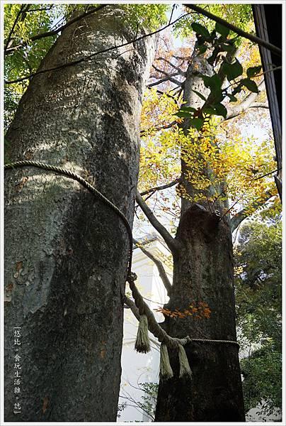 冰川神社-神木-3.JPG