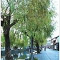柳川-沿岸-3.JPG