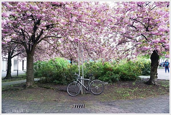 柏林-街道-櫻花.JPG