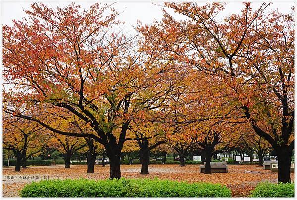木場公園-33.JPG