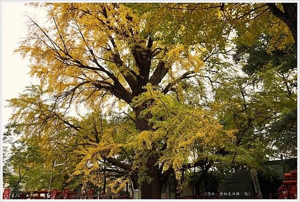 荒川線-鬼子母神堂-8-大銀杏樹.JPG