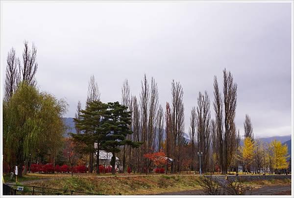 河口湖-大池公園-1.JPG