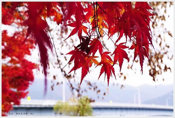 河口湖-大池公園-21.JPG