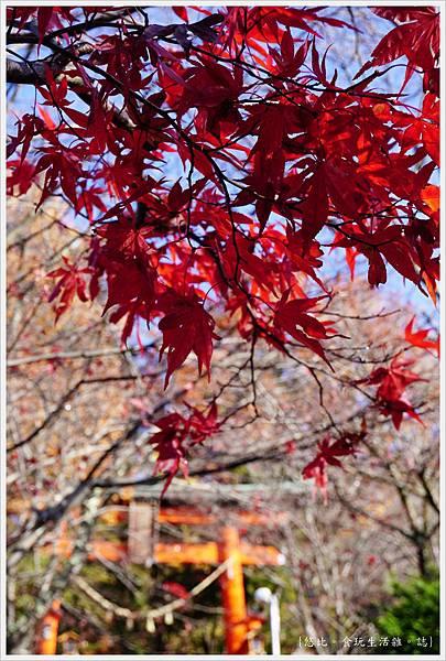 新倉山淺間公園-10-紅葉.JPG