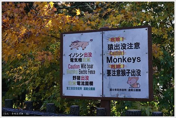新倉山淺間公園-83.JPG