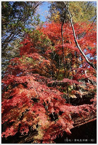 新倉山淺間公園-89-紅葉.JPG