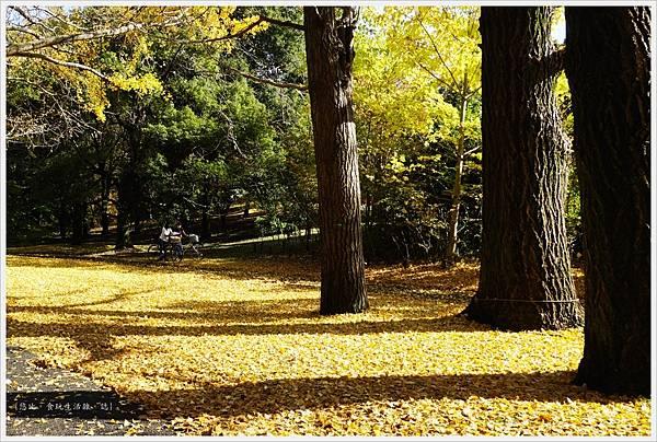 昭和紀念公園-16-銀杏落葉.JPG