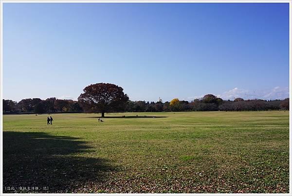 昭和紀念公園-21-2-大眾草原.JPG