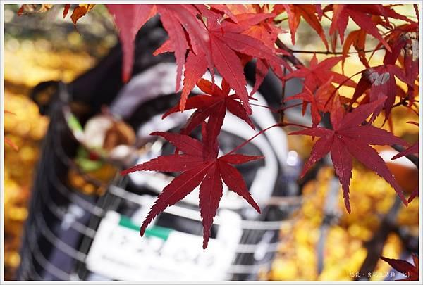 昭和紀念公園-26-紅葉.JPG