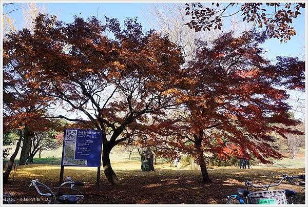昭和紀念公園-27-紅葉.JPG