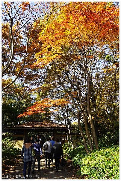 昭和紀念公園-36-日本庭園.JPG