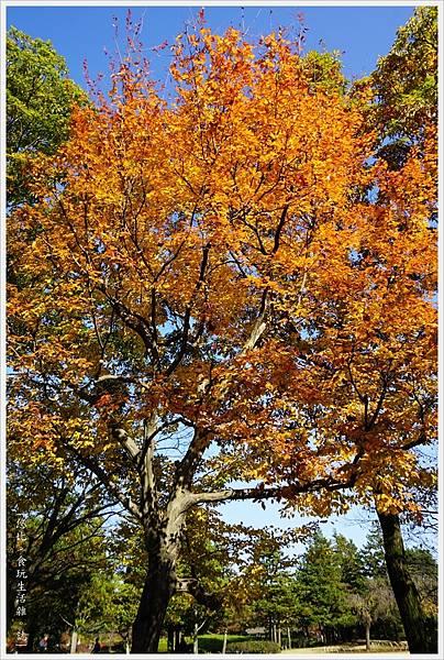昭和紀念公園-37-日本庭園.JPG