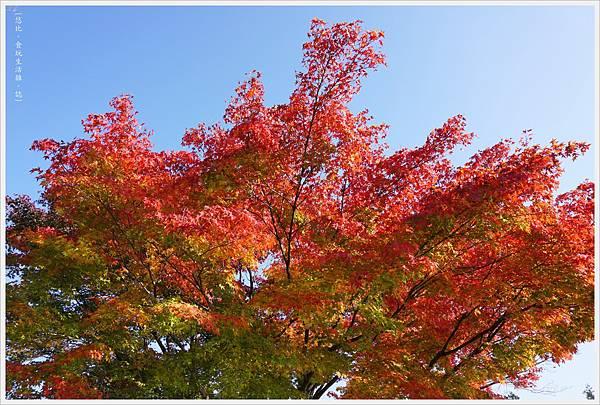昭和紀念公園-67-日本庭園.JPG