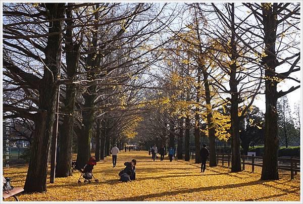 昭和紀念公園-81-銀杏並木.JPG