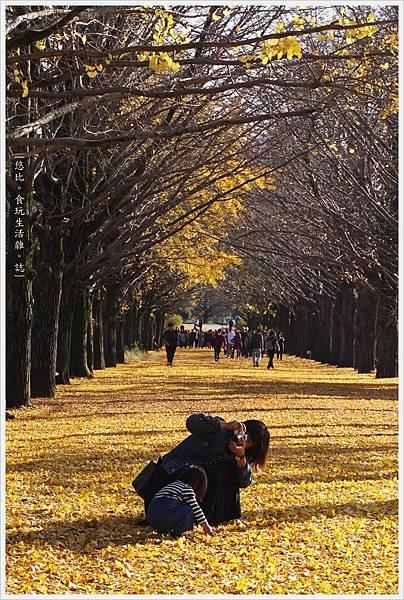 昭和紀念公園-82-銀杏並木.JPG