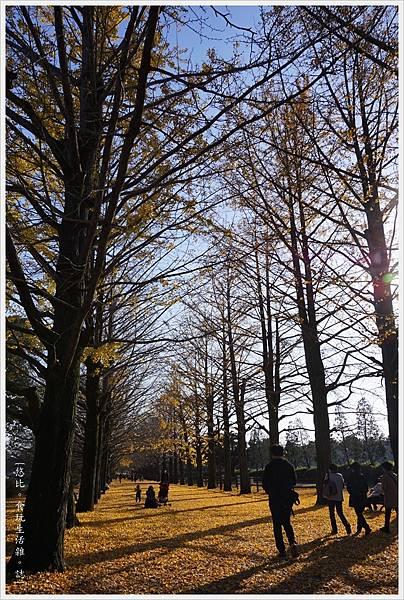 昭和紀念公園-83-銀杏並木.JPG
