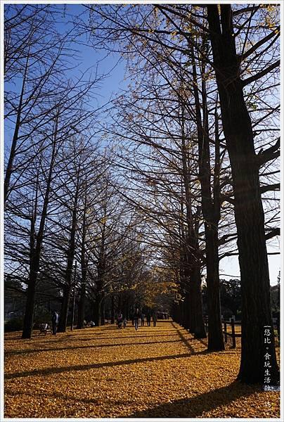 昭和紀念公園-84-銀杏並木.JPG
