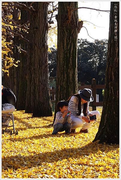 昭和紀念公園-85-銀杏並木.JPG