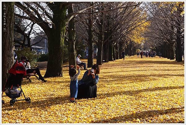 昭和紀念公園-86-銀杏並木.JPG