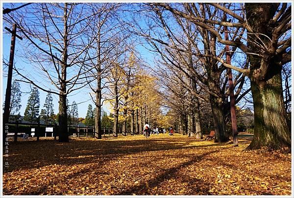 昭和紀念公園-88-銀杏並木.JPG