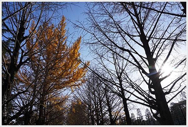 昭和紀念公園-89-銀杏並木.JPG