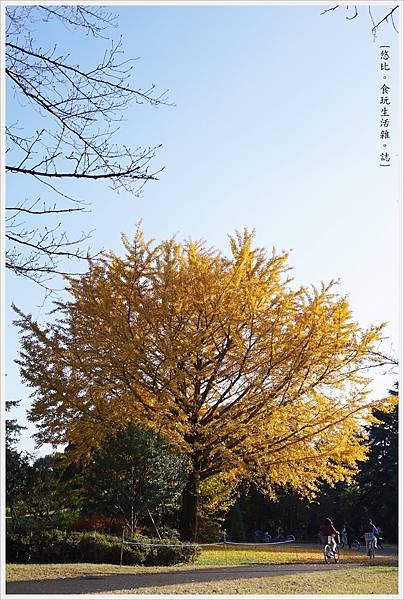 昭和紀念公園-93-銀杏樹.JPG
