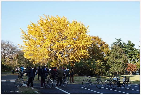 昭和紀念公園-94-銀杏樹.JPG