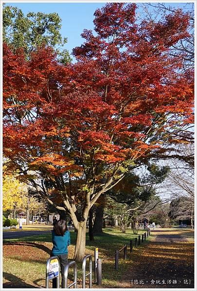 昭和紀念公園-95.JPG