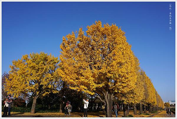 昭和紀念公園-101.JPG