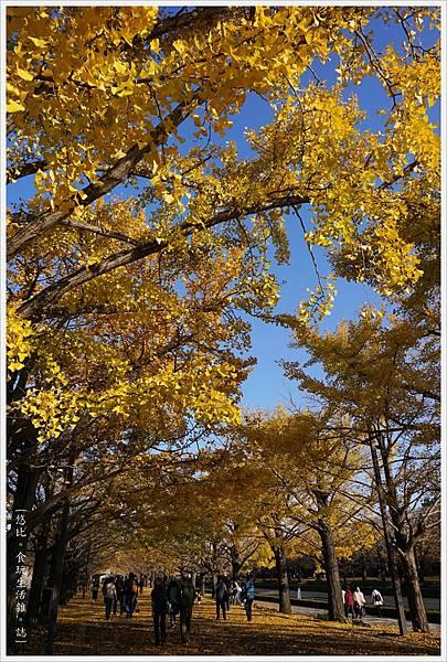 昭和紀念公園-108-銀杏.JPG