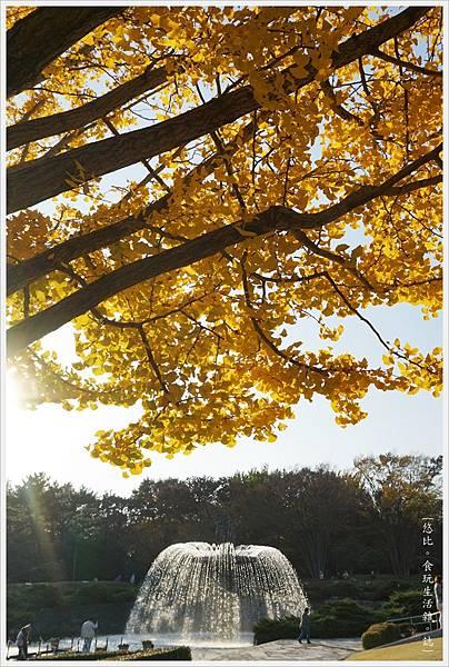 昭和紀念公園-111-銀杏.JPG