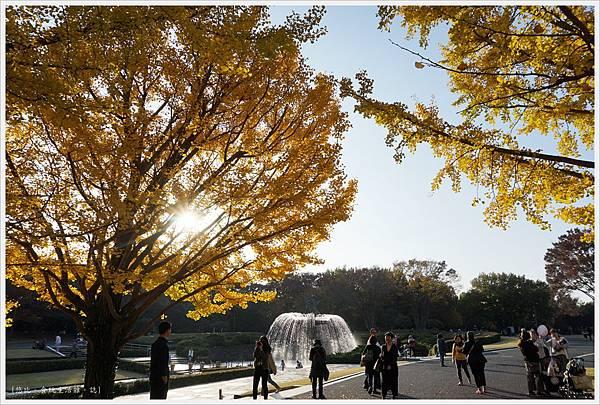 昭和紀念公園-112-銀杏.JPG