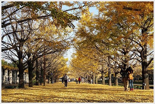 昭和紀念公園-114-銀杏.JPG