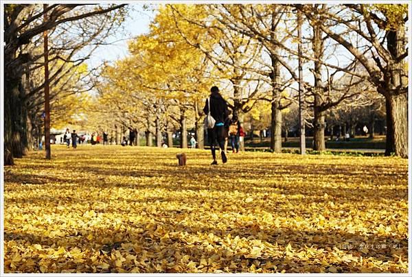 昭和紀念公園-117-銀杏.JPG