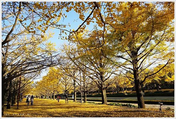昭和紀念公園-118-銀杏.JPG