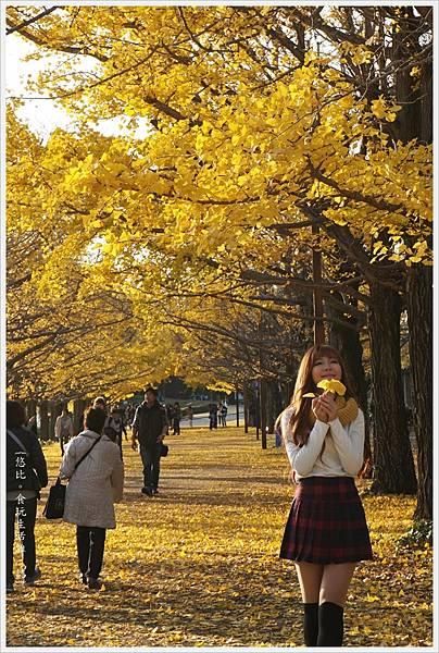 昭和紀念公園-120-銀杏.JPG