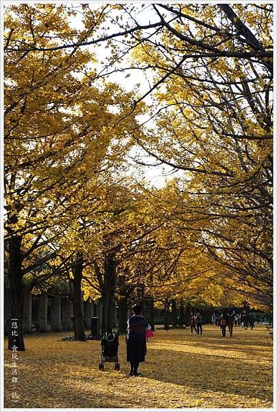 昭和紀念公園-129-銀杏.JPG