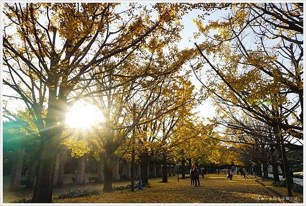 昭和紀念公園-130-銀杏.JPG