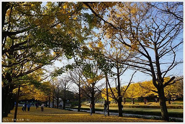 昭和紀念公園-131-銀杏.JPG