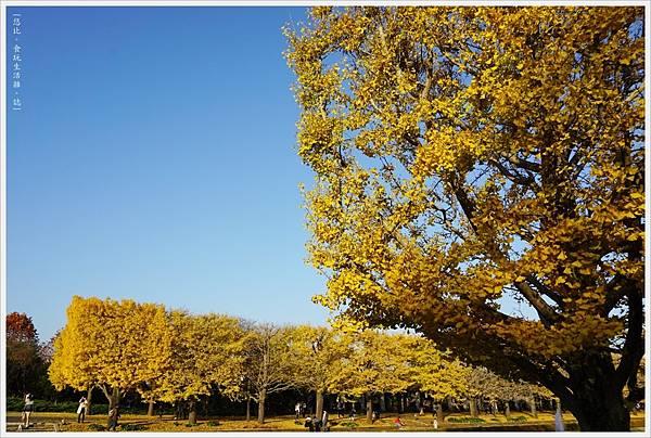 昭和紀念公園-132-銀杏.JPG