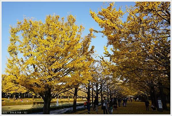 昭和紀念公園-134-銀杏.JPG