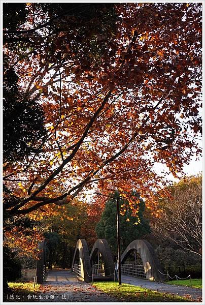 昭和紀念公園-139.JPG