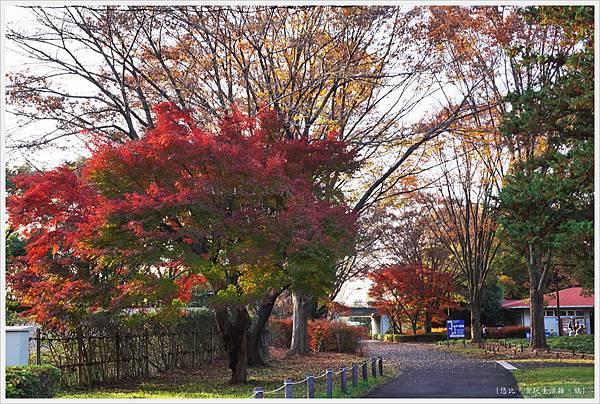 昭和紀念公園-140.JPG