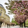 烏茲堡-符茲堡主教宮-11.JPG