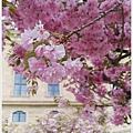 烏茲堡-符茲堡主教宮-13-1.jpg