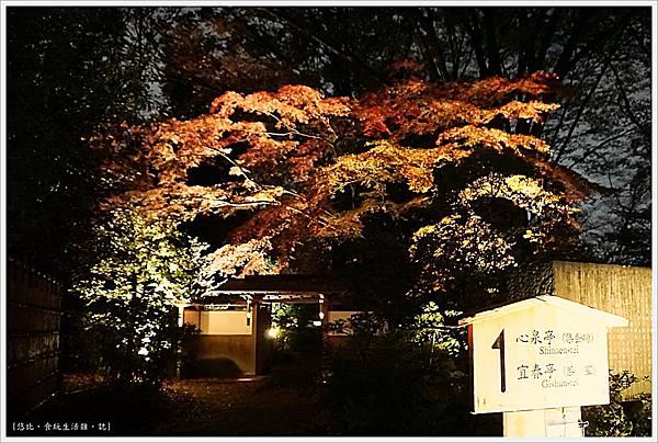 六義園-夜楓-1.JPG