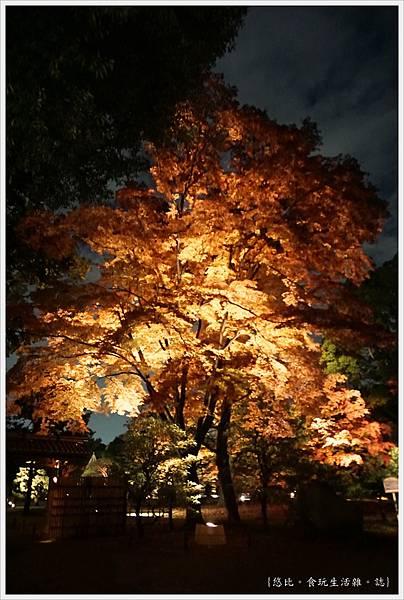 六義園-夜楓-2.JPG