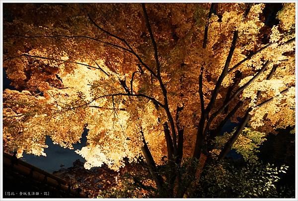 六義園-夜楓-4.JPG