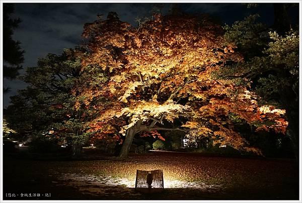六義園-夜楓-5.JPG