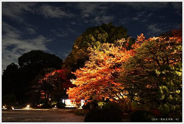 六義園-夜楓-6.JPG